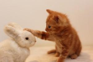 うさぎのぬいぐるみと猫